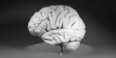 脳皮質の3DCGデータ