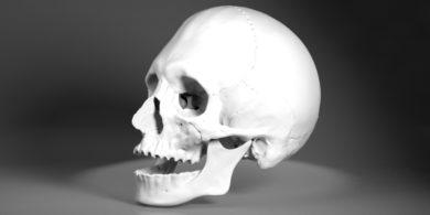 頭蓋骨の3DCGデータ
